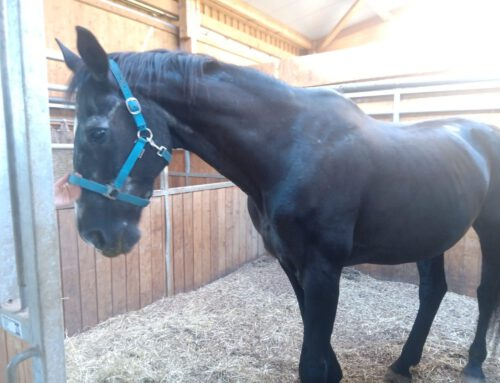 Älteres Pferd – was tun?